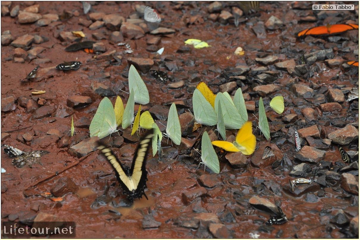 Fabios-LifeTour-Argentina-2015-July-August-Puerto-Iguazu-falls-The-fauna-4239