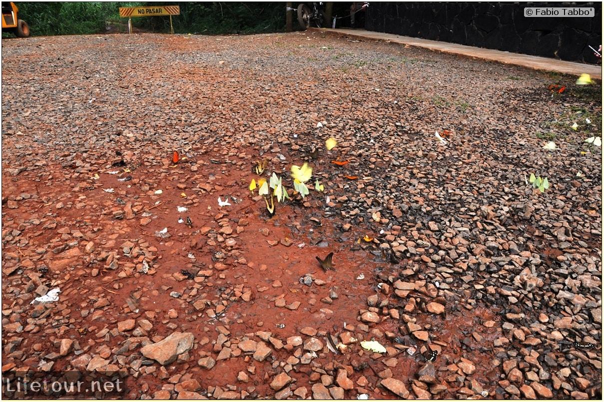 Fabios-LifeTour-Argentina-2015-July-August-Puerto-Iguazu-falls-The-fauna-4448