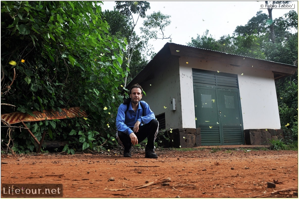 Fabios-LifeTour-Argentina-2015-July-August-Puerto-Iguazu-falls-The-fauna-5864