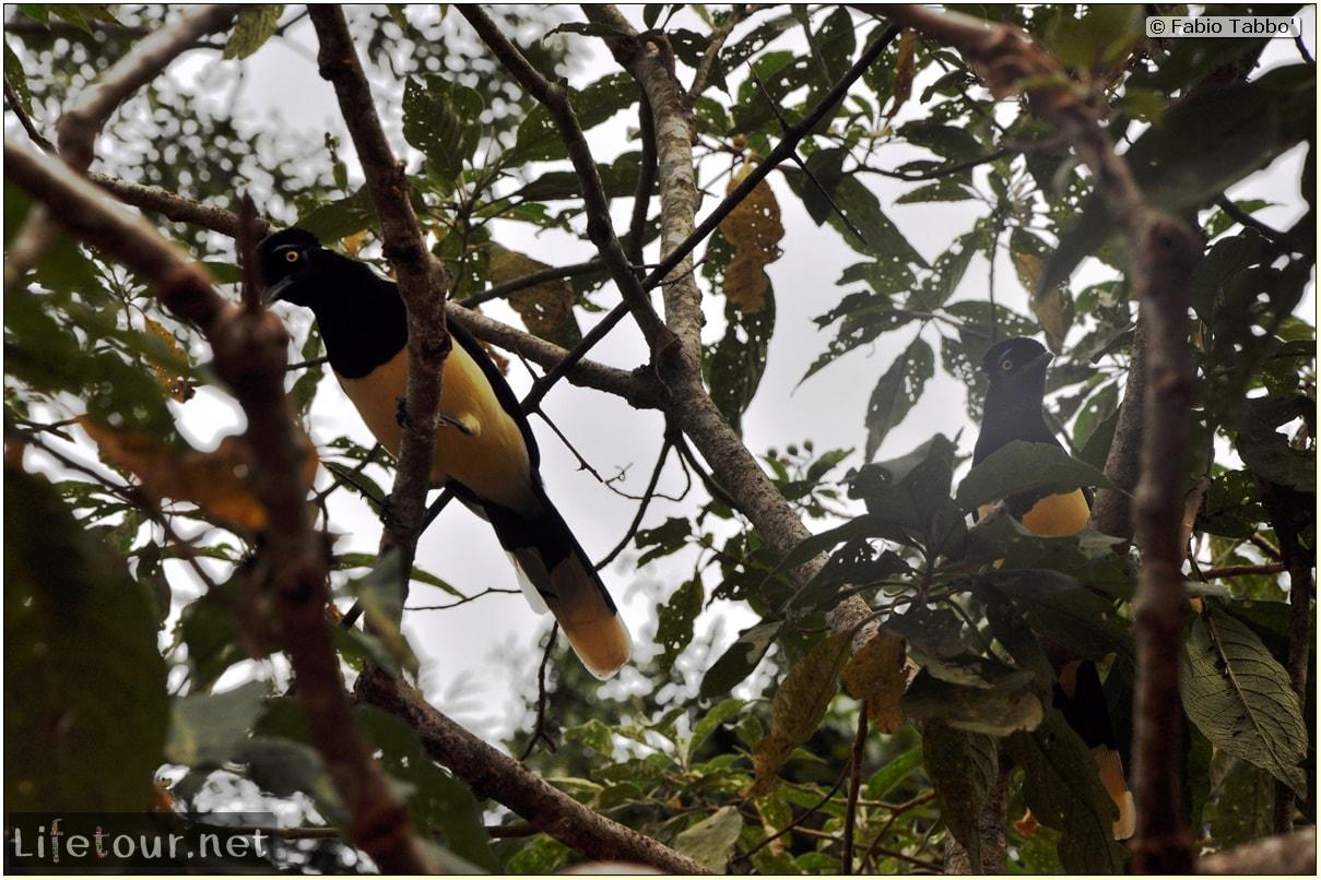 Fabios-LifeTour-Argentina-2015-July-August-Puerto-Iguazu-falls-The-fauna-6093