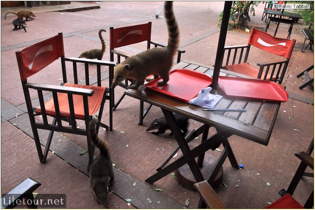 Fabios-LifeTour-Argentina-2015-July-August-Puerto-Iguazu-falls-The-fauna-7345