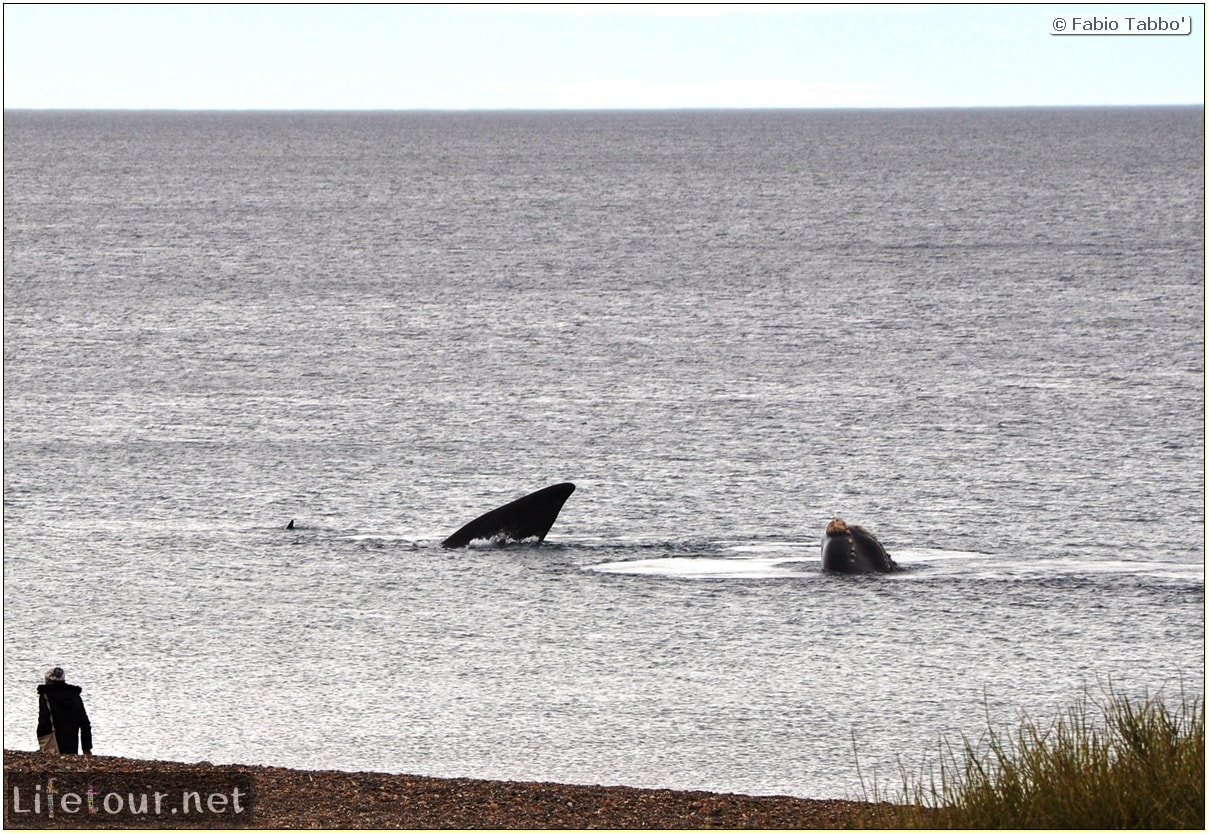 Fabios-LifeTour-Argentina-2015-July-August-Puerto-Madryn-El-Doradillo-whale-watching-2.-5417-cover-1