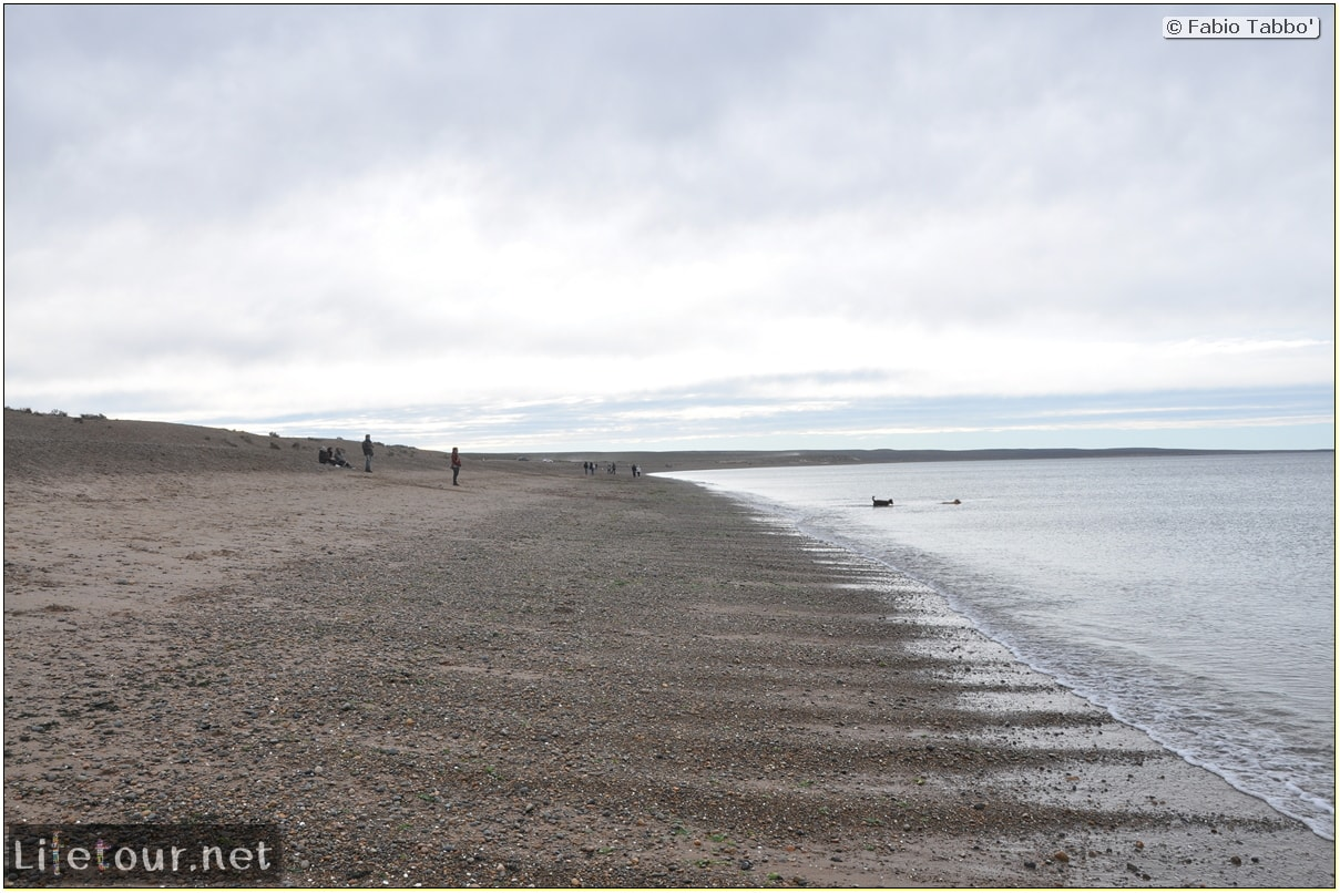 Fabios-LifeTour-Argentina-2015-July-August-Puerto-Madryn-El-Doradillo-whale-watching-2.-El-Doradillo-whale-watching-2300