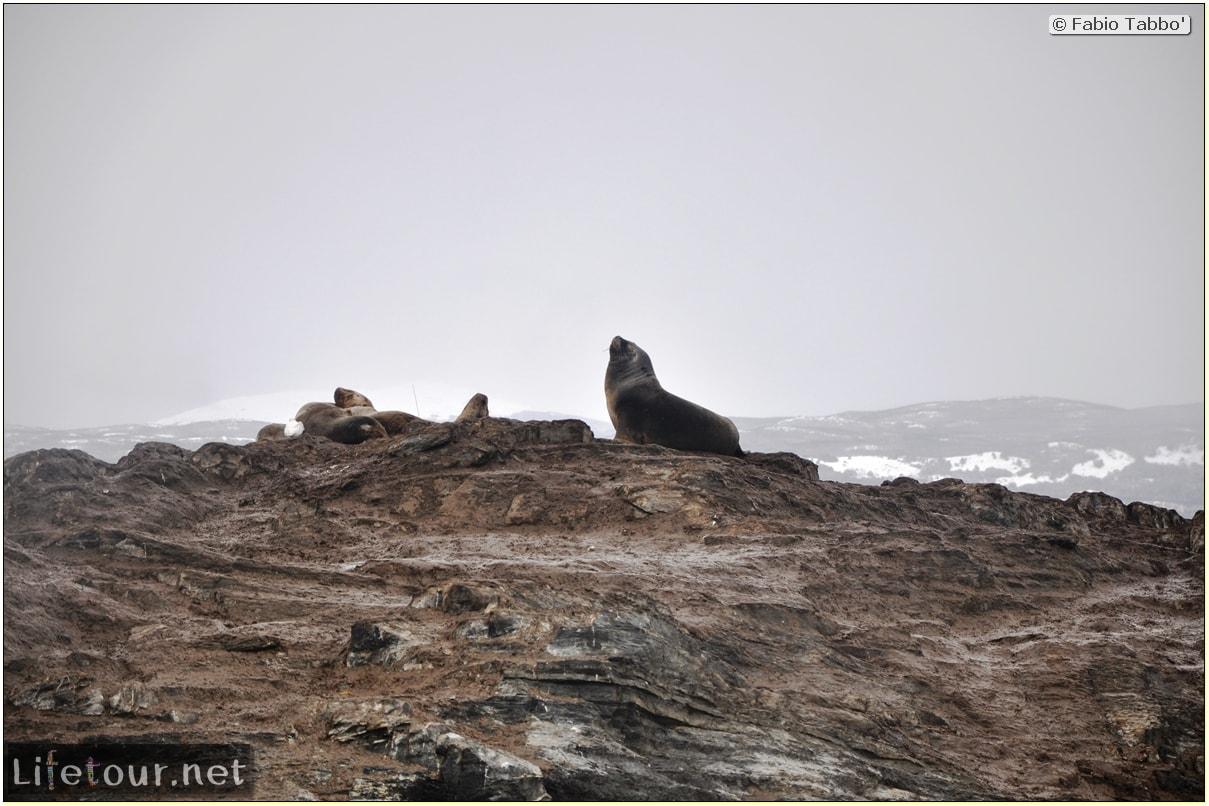 Fabios-LifeTour-Argentina-2015-July-August-Ushuaia-Beagle-Channel-2-Sea-lions-4496
