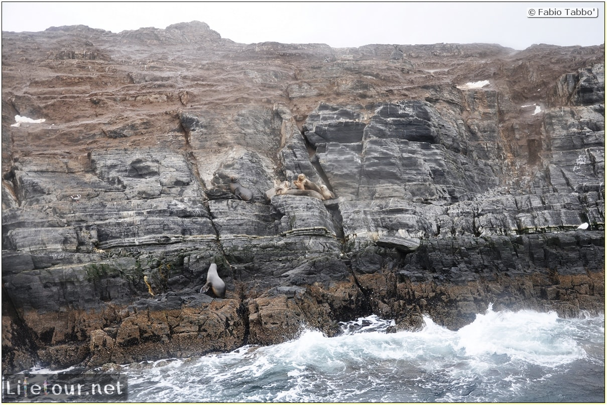 Fabios-LifeTour-Argentina-2015-July-August-Ushuaia-Beagle-Channel-2-Sea-lions-5821