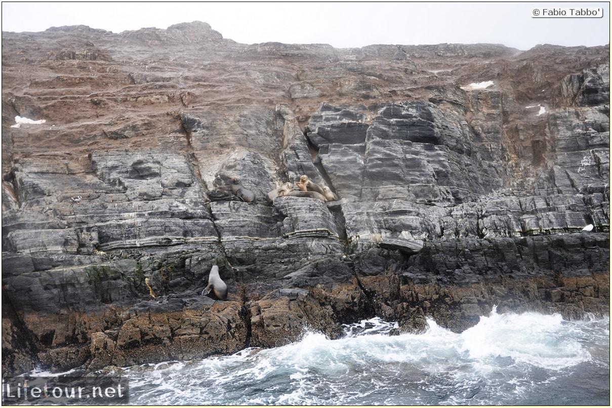 Fabios-LifeTour-Argentina-2015-July-August-Ushuaia-Beagle-Channel-2-Sea-lions-5821