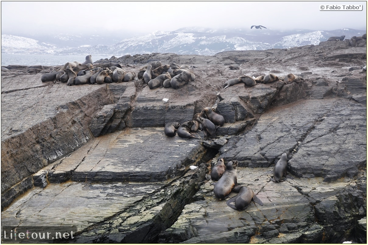 Fabios-LifeTour-Argentina-2015-July-August-Ushuaia-Beagle-Channel-2-Sea-lions-6970