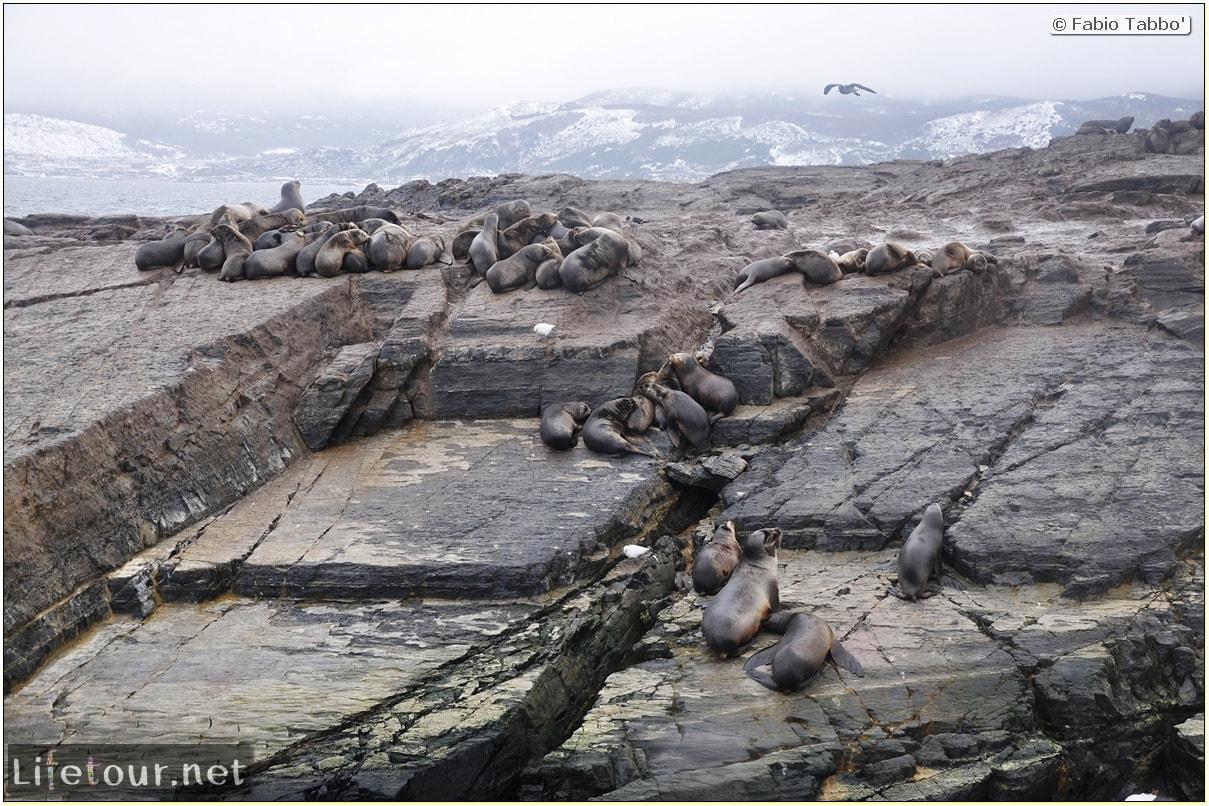Fabios-LifeTour-Argentina-2015-July-August-Ushuaia-Beagle-Channel-2-Sea-lions-6970