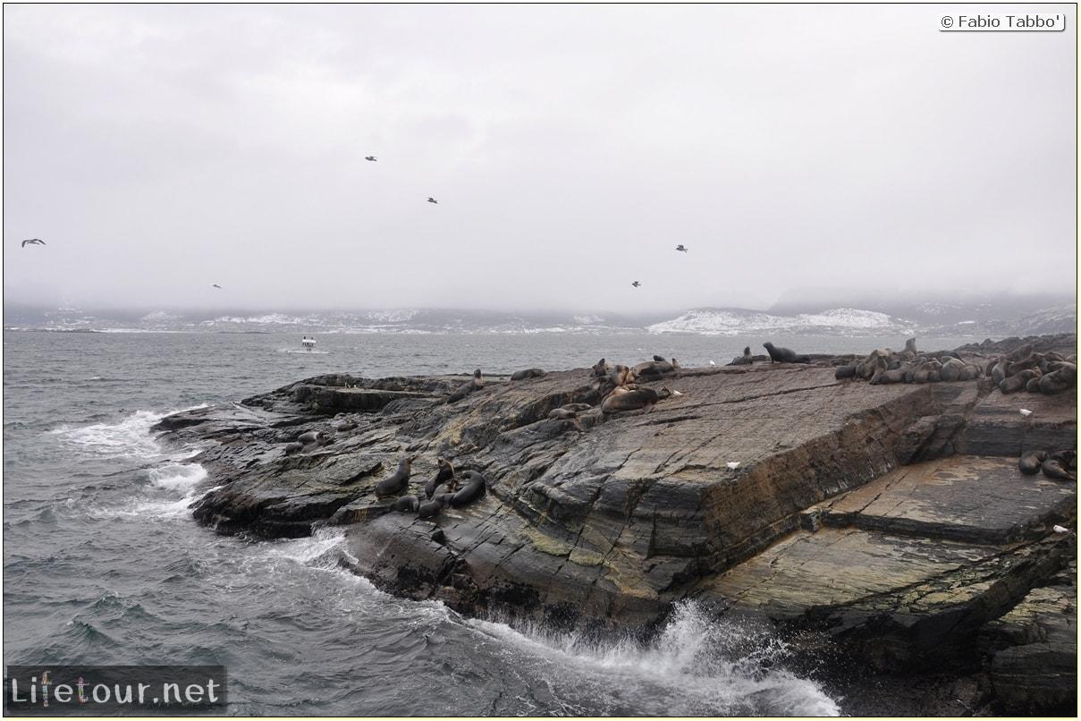 Fabios-LifeTour-Argentina-2015-July-August-Ushuaia-Beagle-Channel-2-Sea-lions-7149