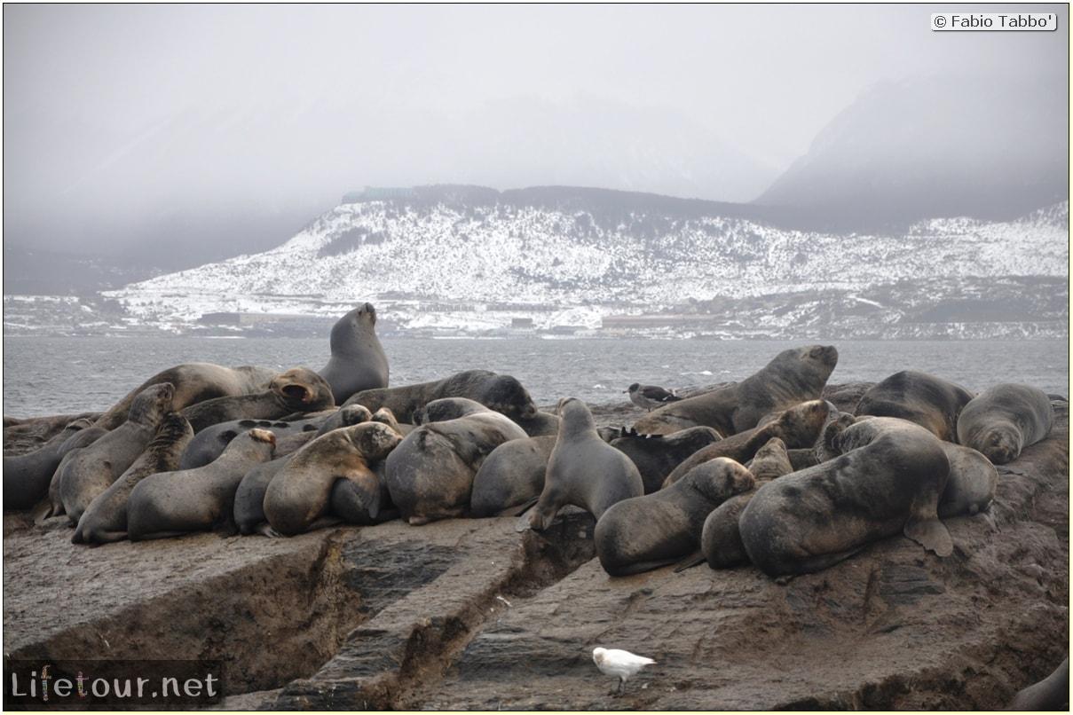 Fabios-LifeTour-Argentina-2015-July-August-Ushuaia-Beagle-Channel-2-Sea-lions-7535