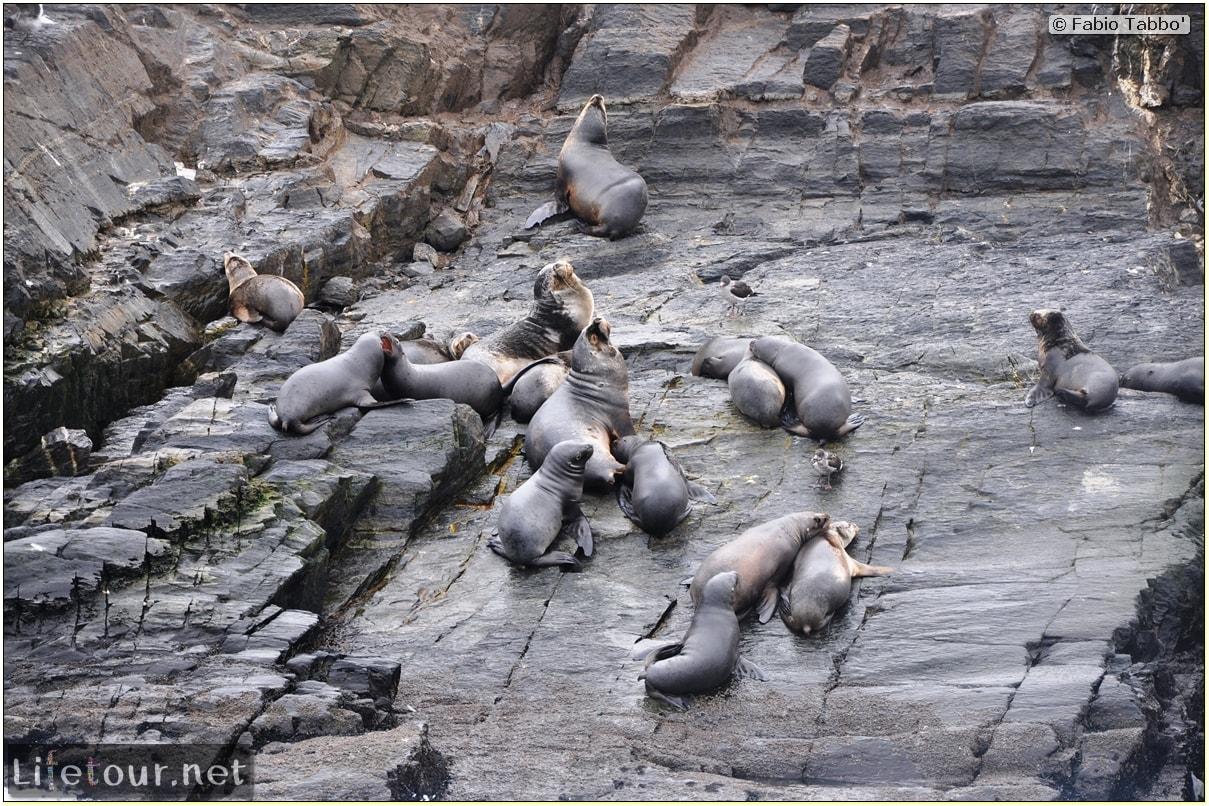 Fabios-LifeTour-Argentina-2015-July-August-Ushuaia-Beagle-Channel-2-Sea-lions-7800