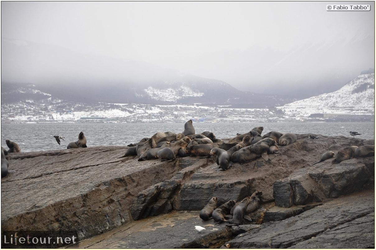Fabios-LifeTour-Argentina-2015-July-August-Ushuaia-Beagle-Channel-2-Sea-lions-7915-cover