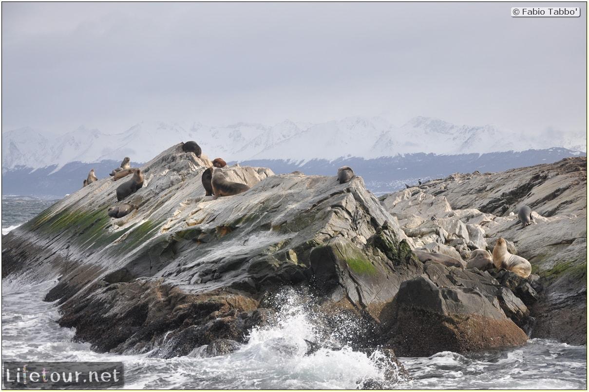 Fabios-LifeTour-Argentina-2015-July-August-Ushuaia-Beagle-Channel-2-Sea-lions-9648