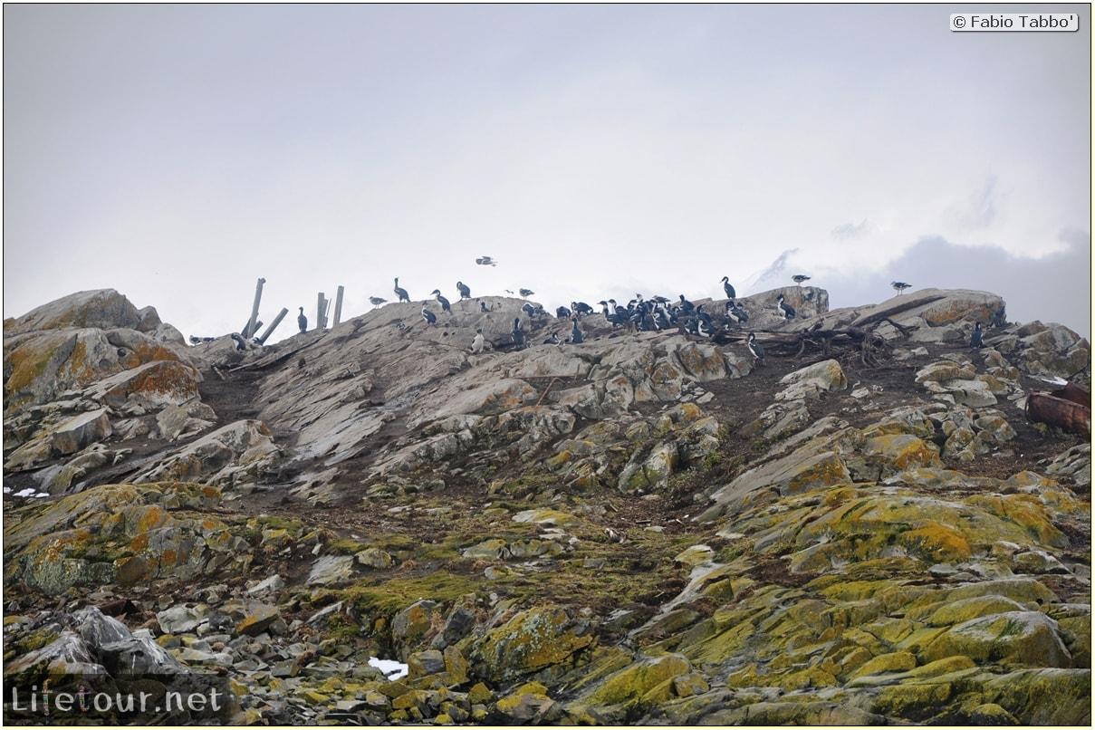 Fabios-LifeTour-Argentina-2015-July-August-Ushuaia-Beagle-Channel-3-Cormorants-10339