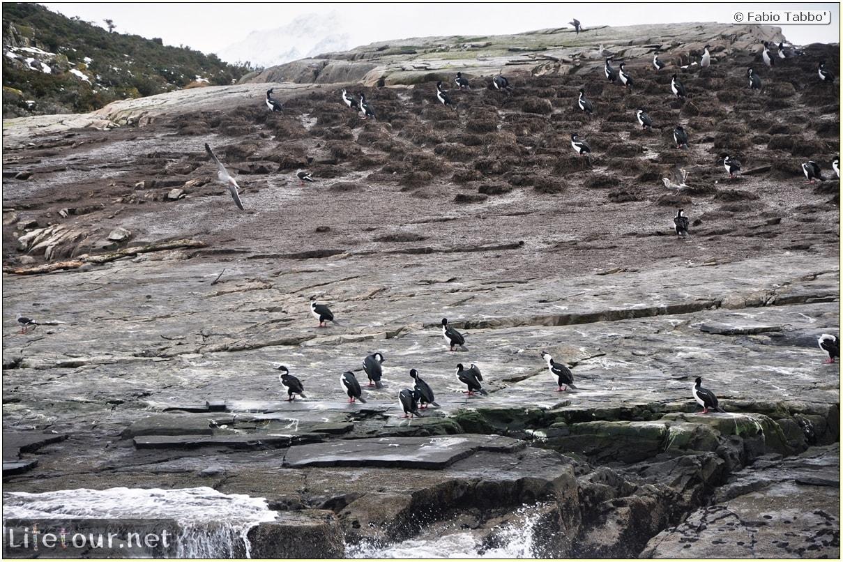 Fabios-LifeTour-Argentina-2015-July-August-Ushuaia-Beagle-Channel-3-Cormorants-8479