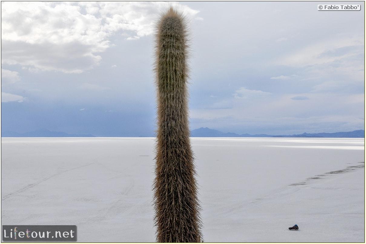 Fabio_s-LifeTour---Bolivia-(2015-March)---Ujuni---Salar-de-Ujuni---4--Incahuasi-Island-(Isla-de-los-Pescados)---1-cover