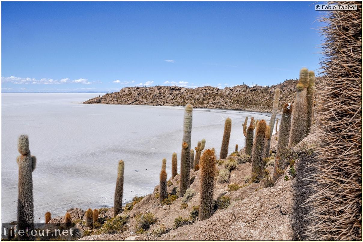 Fabio_s-LifeTour---Bolivia-(2015-March)---Ujuni---Salar-de-Ujuni---4--Incahuasi-Island-(Isla-de-los-Pescados)---11-cover