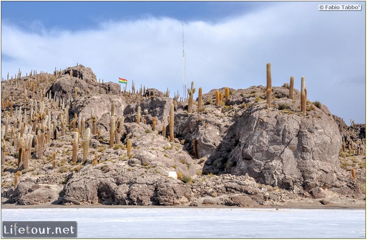 Fabio_s-LifeTour---Bolivia-(2015-March)---Ujuni---Salar-de-Ujuni---4--Incahuasi-Island-(Isla-de-los-Pescados)---11157