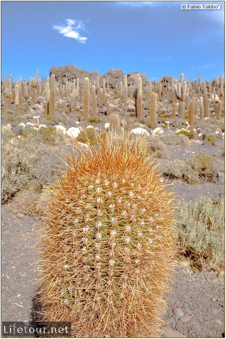 Fabio_s-LifeTour---Bolivia-(2015-March)---Ujuni---Salar-de-Ujuni---4--Incahuasi-Island-(Isla-de-los-Pescados)---11392