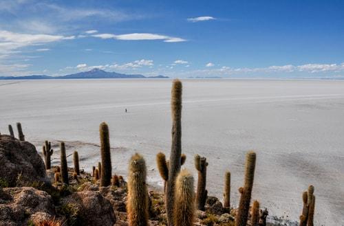 Fabio_s-LifeTour---Bolivia-(2015-March)---Ujuni---Salar-de-Ujuni---4--Incahuasi-Island-(Isla-de-los-Pescados)---11448-cover