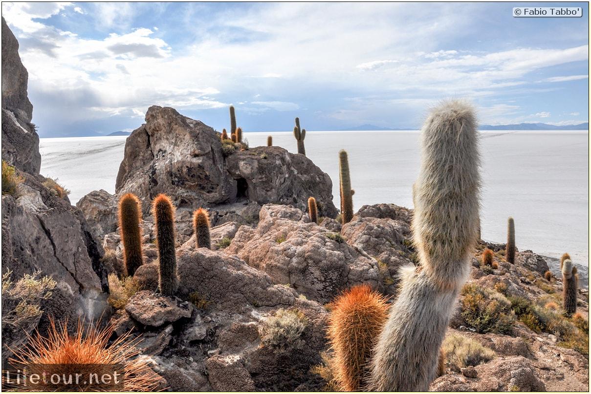 Fabio_s-LifeTour---Bolivia-(2015-March)---Ujuni---Salar-de-Ujuni---4--Incahuasi-Island-(Isla-de-los-Pescados)---11519