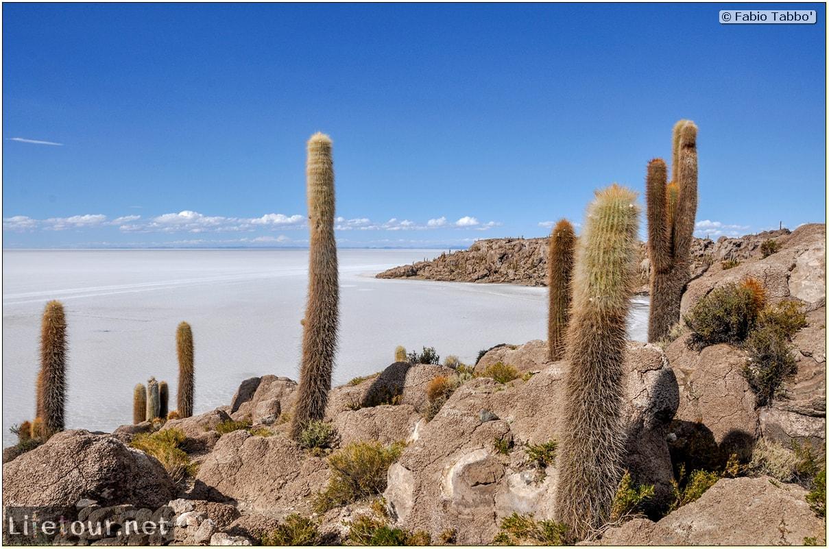 Fabio_s-LifeTour---Bolivia-(2015-March)---Ujuni---Salar-de-Ujuni---4--Incahuasi-Island-(Isla-de-los-Pescados)---11622