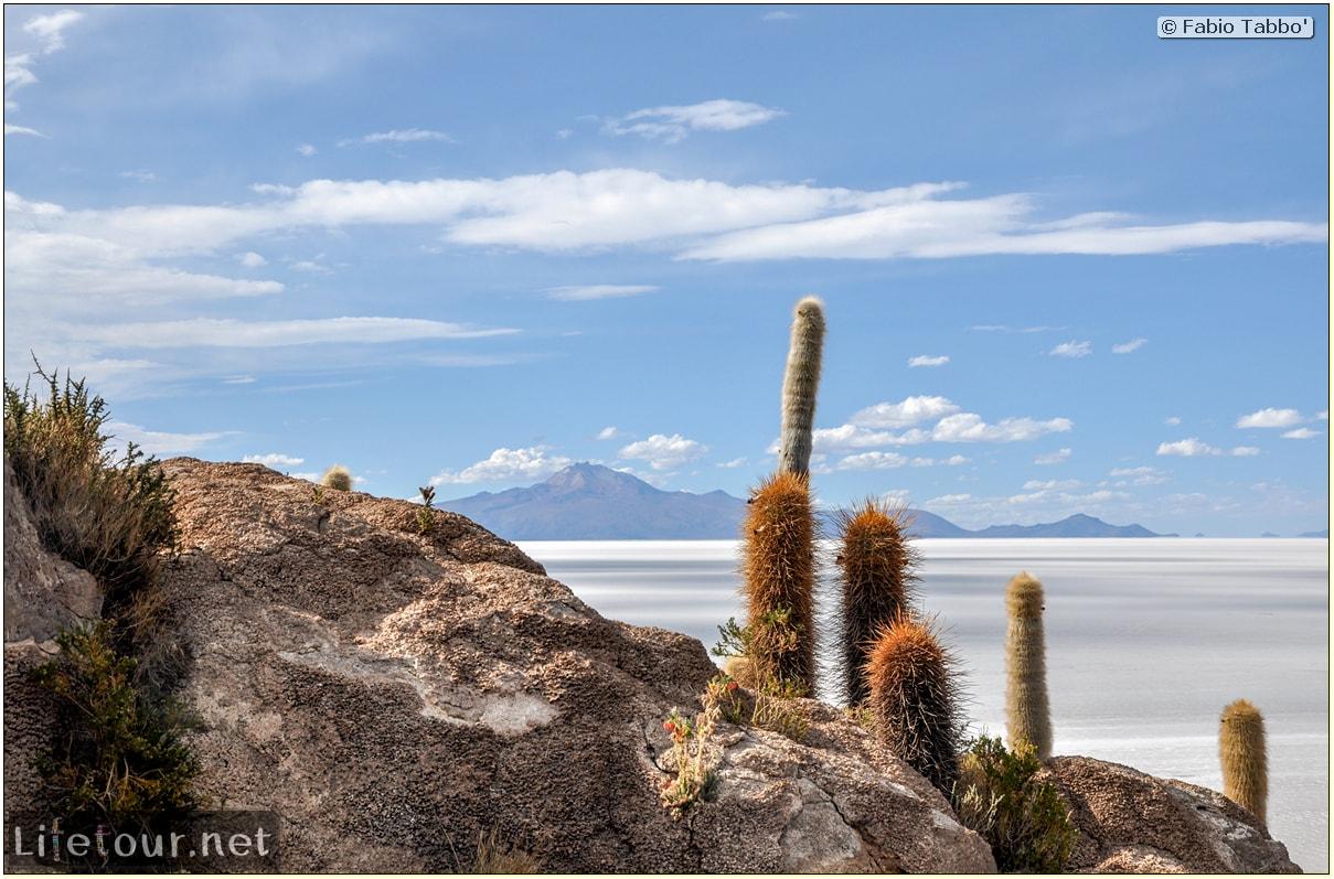 Fabio_s-LifeTour---Bolivia-(2015-March)---Ujuni---Salar-de-Ujuni---4--Incahuasi-Island-(Isla-de-los-Pescados)---11715