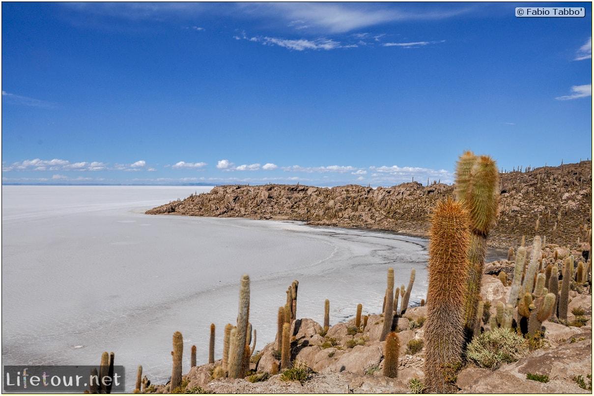 Fabio_s-LifeTour---Bolivia-(2015-March)---Ujuni---Salar-de-Ujuni---4--Incahuasi-Island-(Isla-de-los-Pescados)---11739
