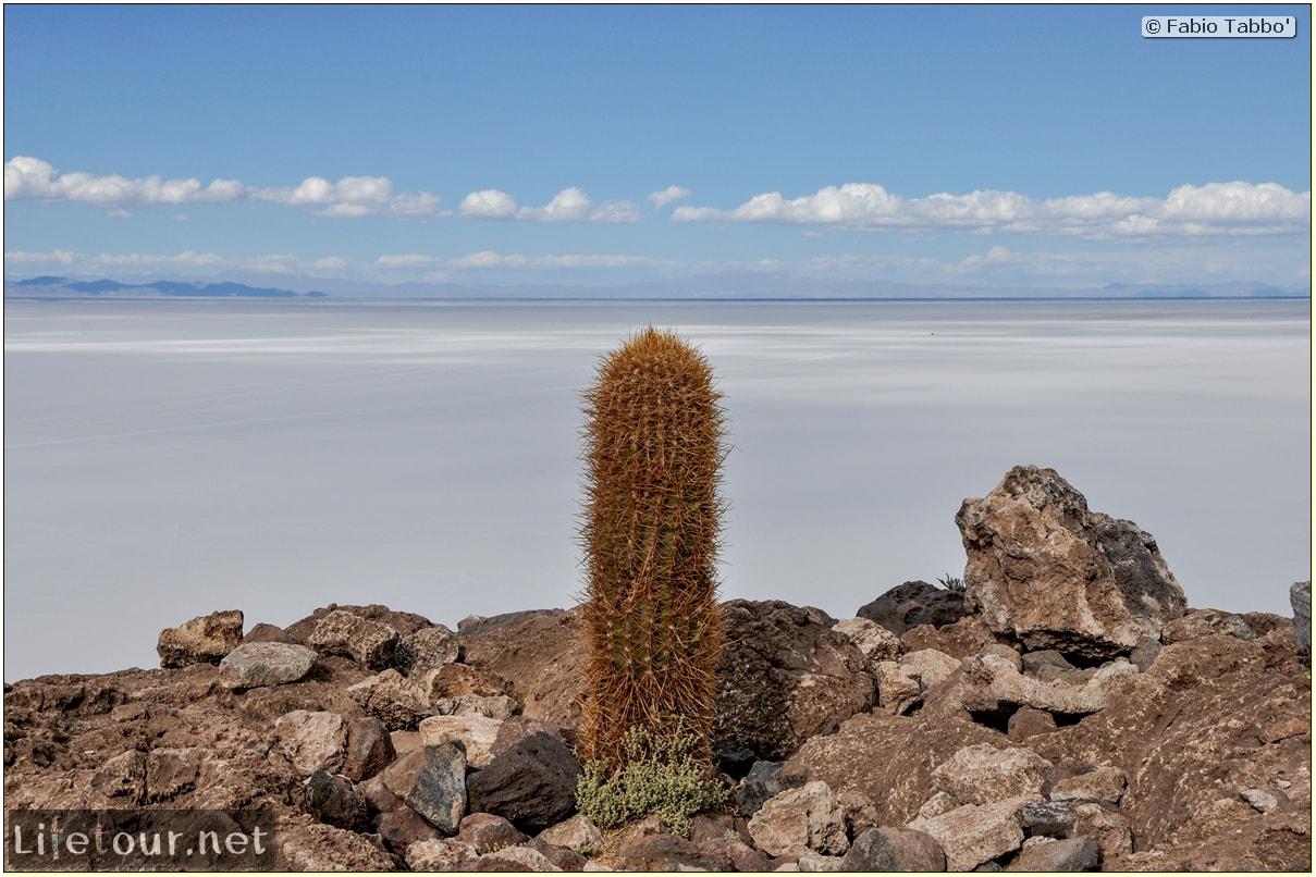Fabio_s-LifeTour---Bolivia-(2015-March)---Ujuni---Salar-de-Ujuni---4--Incahuasi-Island-(Isla-de-los-Pescados)-118-cover