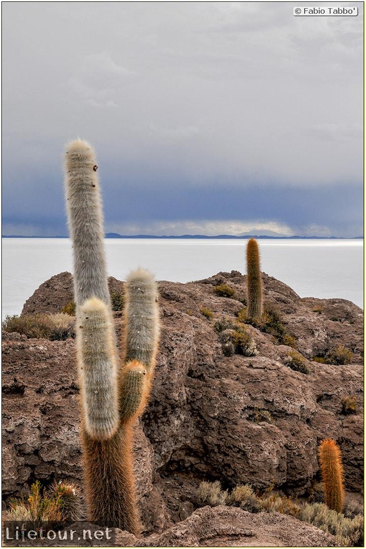 Fabio_s-LifeTour---Bolivia-(2015-March)---Ujuni---Salar-de-Ujuni---4--Incahuasi-Island-(Isla-de-los-Pescados)---11839