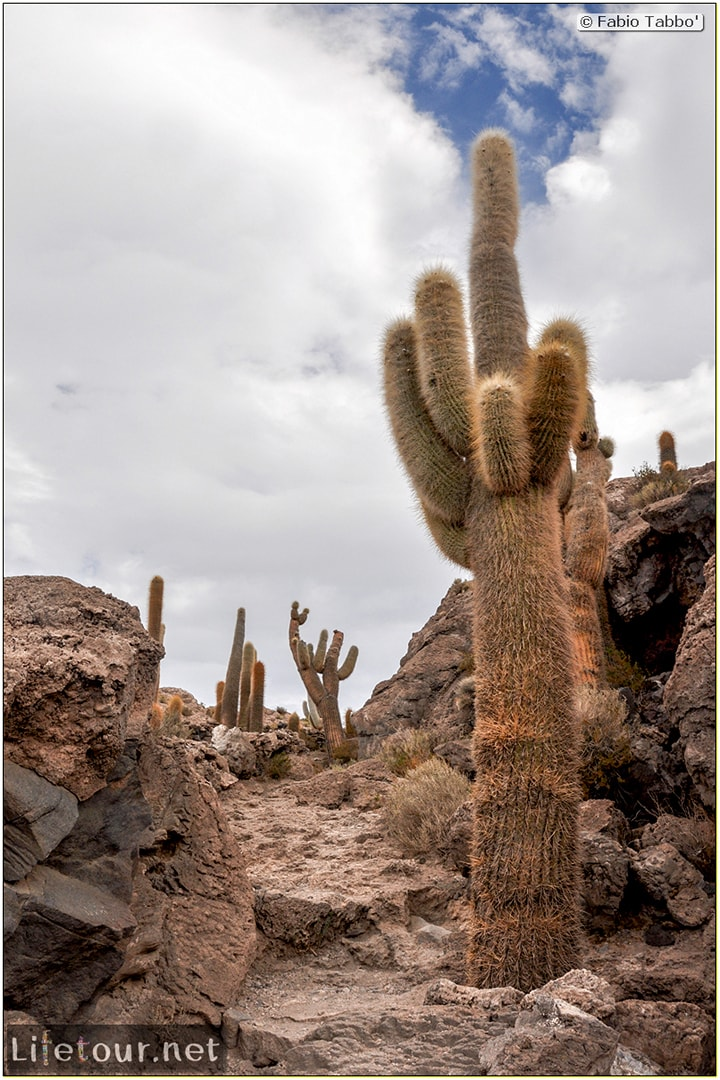 Fabio_s-LifeTour---Bolivia-(2015-March)---Ujuni---Salar-de-Ujuni---4--Incahuasi-Island-(Isla-de-los-Pescados)---11844
