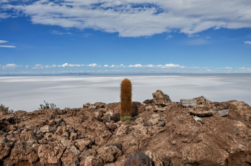Fabio_s-LifeTour---Bolivia-(2015-March)---Ujuni---Salar-de-Ujuni---4--Incahuasi-Island-(Isla-de-los-Pescados)---11877-cover