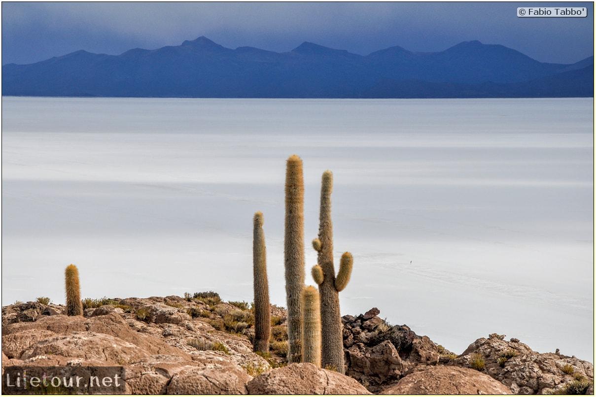 Fabio_s-LifeTour---Bolivia-(2015-March)---Ujuni---Salar-de-Ujuni---4--Incahuasi-Island-(Isla-de-los-Pescados)---11921-cover