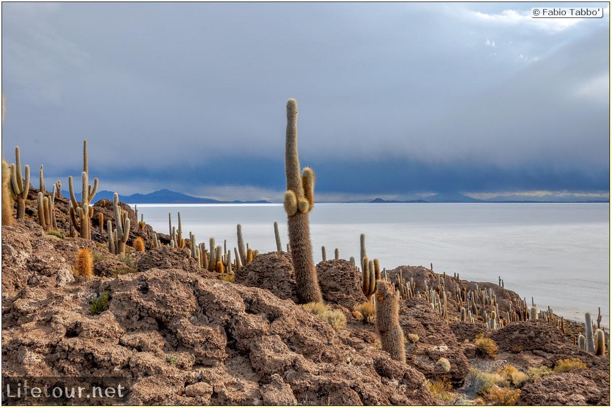 Fabio_s-LifeTour---Bolivia-(2015-March)---Ujuni---Salar-de-Ujuni---4--Incahuasi-Island-(Isla-de-los-Pescados)---11997-cover