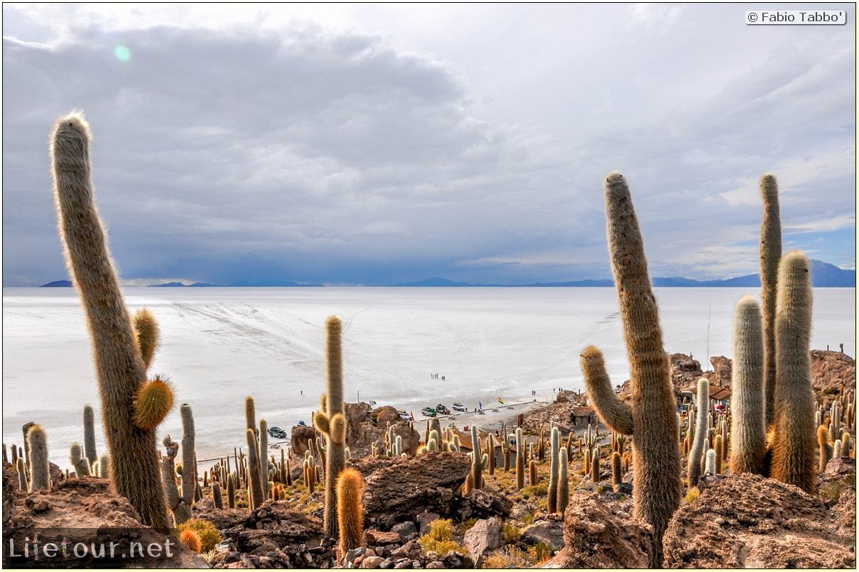 Fabio_s-LifeTour---Bolivia-(2015-March)---Ujuni---Salar-de-Ujuni---4--Incahuasi-Island-(Isla-de-los-Pescados)---12000