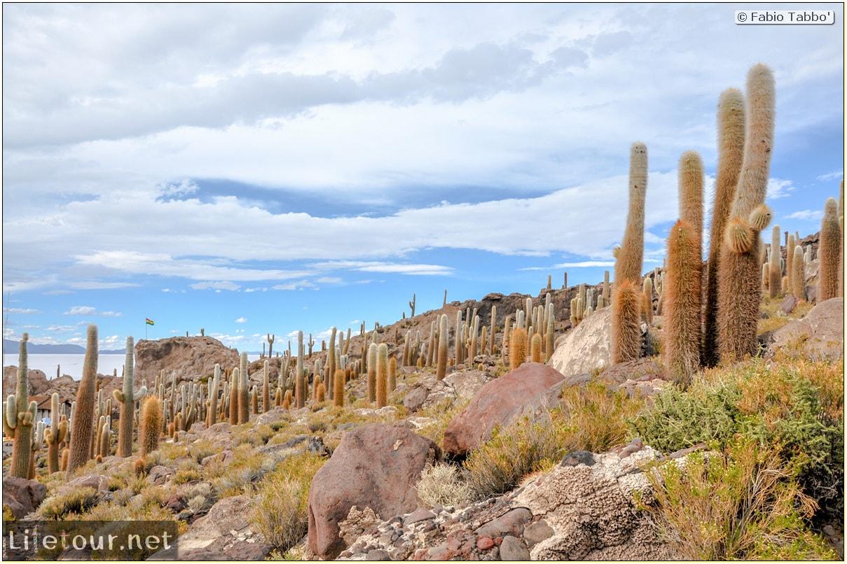 Fabio_s-LifeTour---Bolivia-(2015-March)---Ujuni---Salar-de-Ujuni---4--Incahuasi-Island-(Isla-de-los-Pescados)---12008