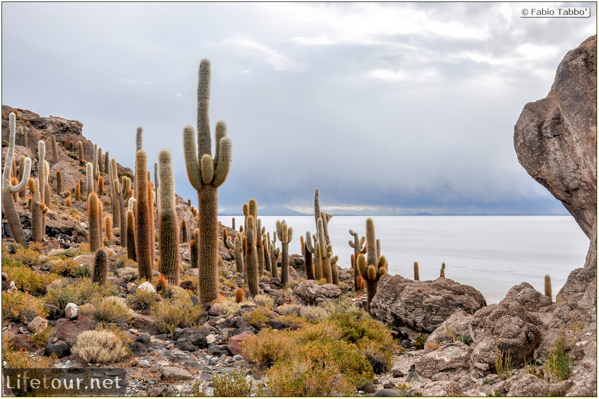 Fabio_s-LifeTour---Bolivia-(2015-March)---Ujuni---Salar-de-Ujuni---4--Incahuasi-Island-(Isla-de-los-Pescados)---12016
