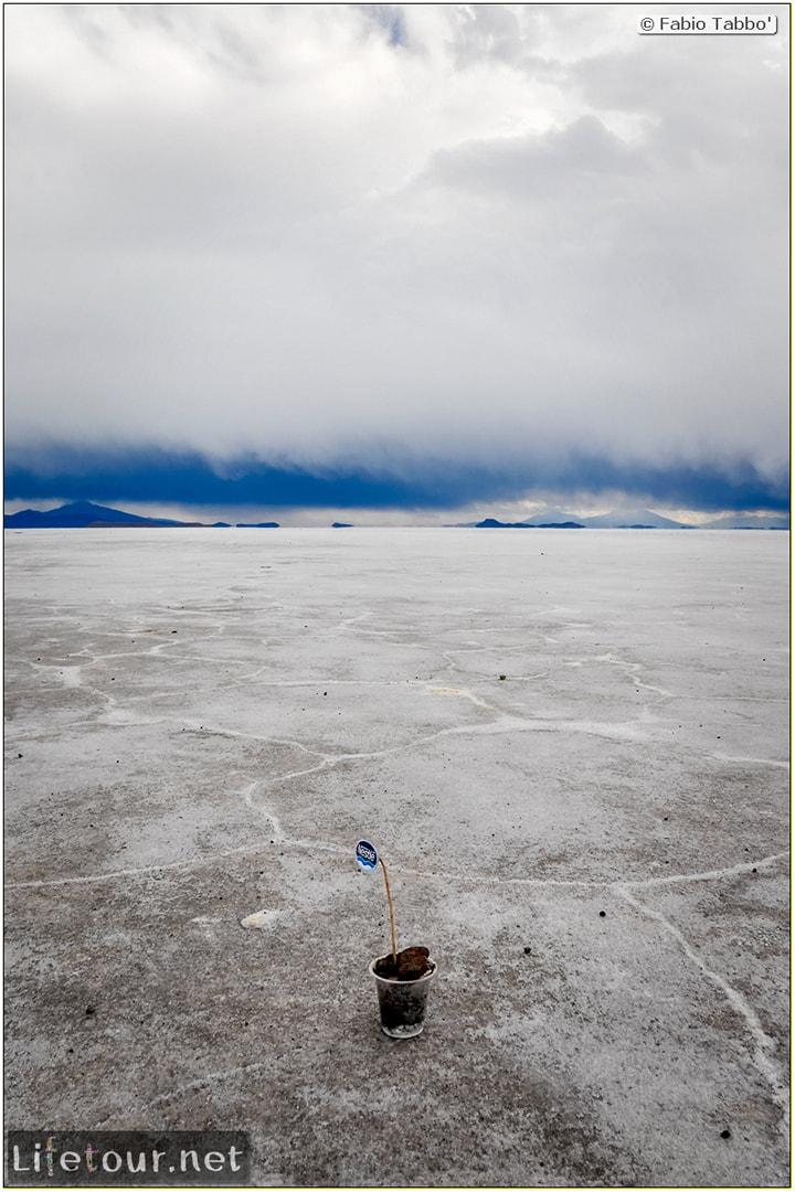 Fabio_s-LifeTour---Bolivia-(2015-March)---Ujuni---Salar-de-Ujuni---4--Incahuasi-Island-(Isla-de-los-Pescados)---12025-cover