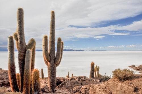 Fabio_s-LifeTour---Bolivia-(2015-March)---Ujuni---Salar-de-Ujuni---4--Incahuasi-Island-(Isla-de-los-Pescados)---2-cover