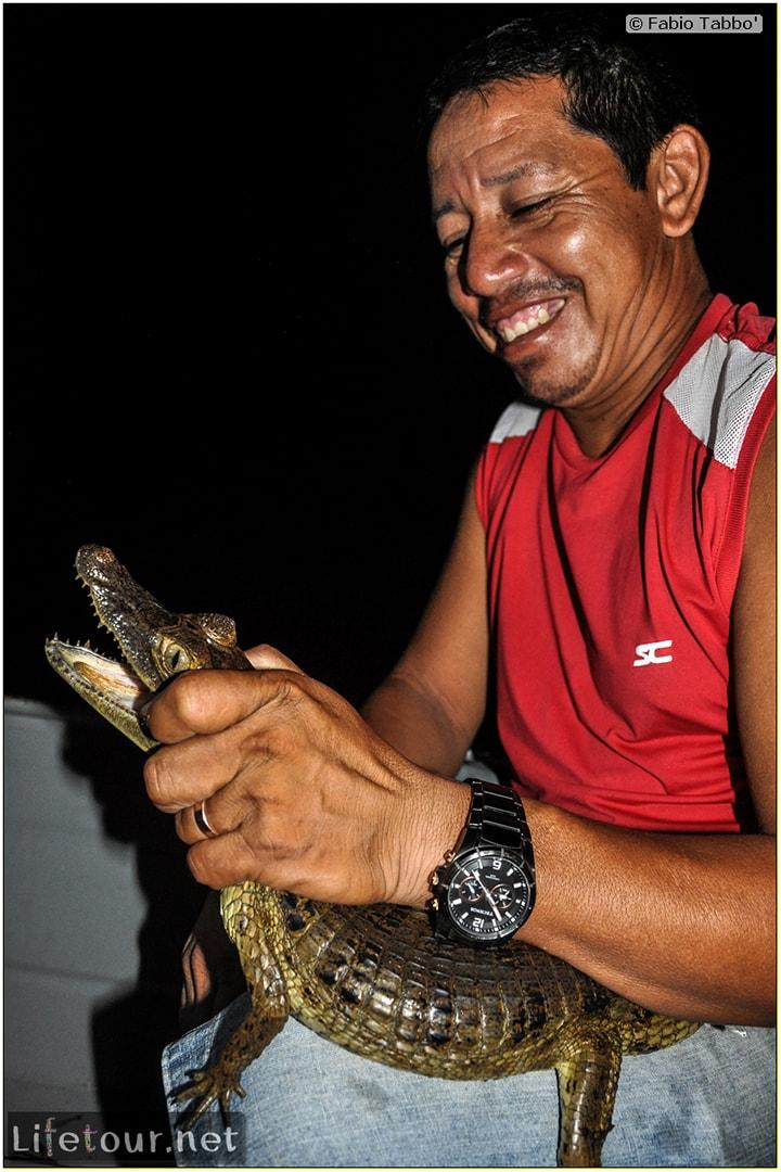 Fabio's LifeTour - Brazil (2015 April-June and October) - Manaus - Amazon Jungle - Alligator petting - 9692 cover