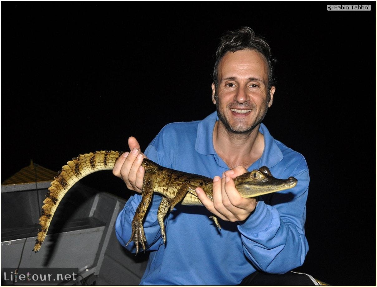 Fabio's LifeTour - Brazil (2015 April-June and October) - Manaus - Amazon Jungle - Alligator petting - 9901 cover