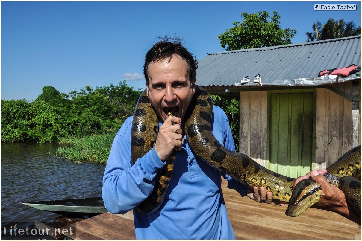Fabio's LifeTour - Brazil (2015 April-June and October) - Manaus - Amazon Jungle - Anaconda petting - 11201 cover