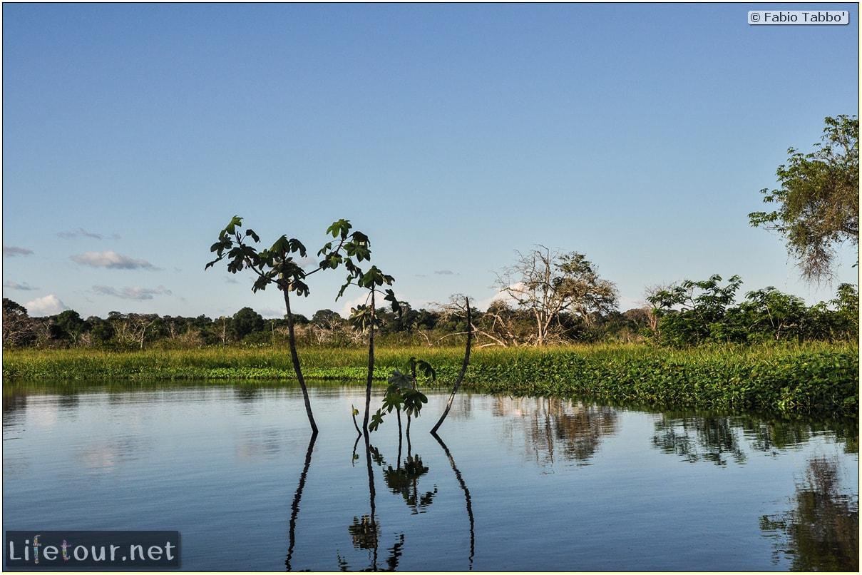 Fabio's LifeTour - Brazil (2015 April-June and October) - Manaus - Amazon Jungle - Piranha fishing - 10643
