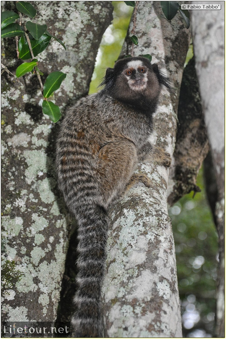 Fabio's LifeTour - Brazil (2015 April-June and October) - Chapada Diamantina - National Park - 5- erratic trekking - 10186