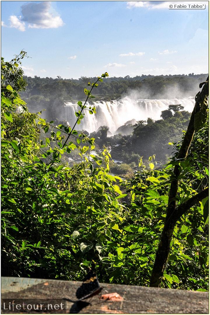 Fabio's LifeTour - Brazil (2015 April-June and October) - Iguazu falls - The butterflies - 5413