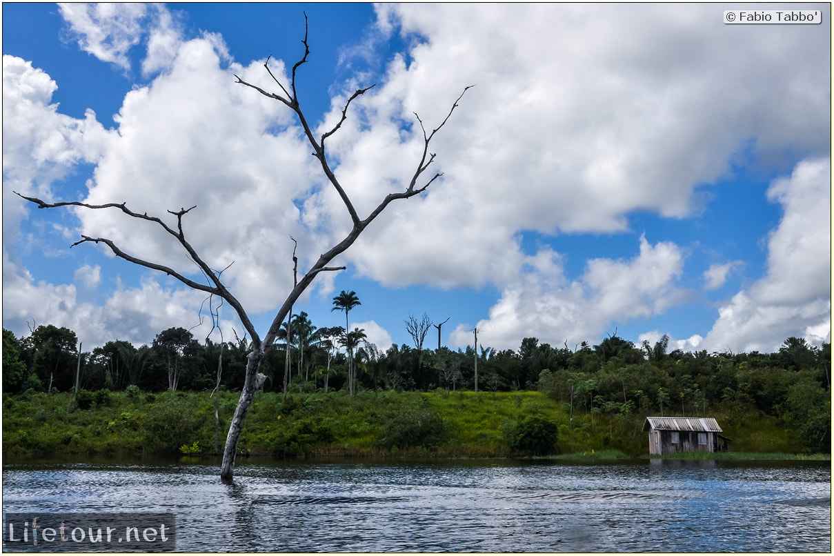 Fabio's LifeTour - Brazil (2015 April-June and October) - Manaus - Amazon Jungle - Cruising the Amazon river- other pictures - 10565