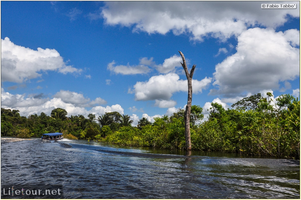 Fabio's LifeTour - Brazil (2015 April-June and October) - Manaus - Amazon Jungle - Cruising the Amazon river- other pictures - 10592 cover