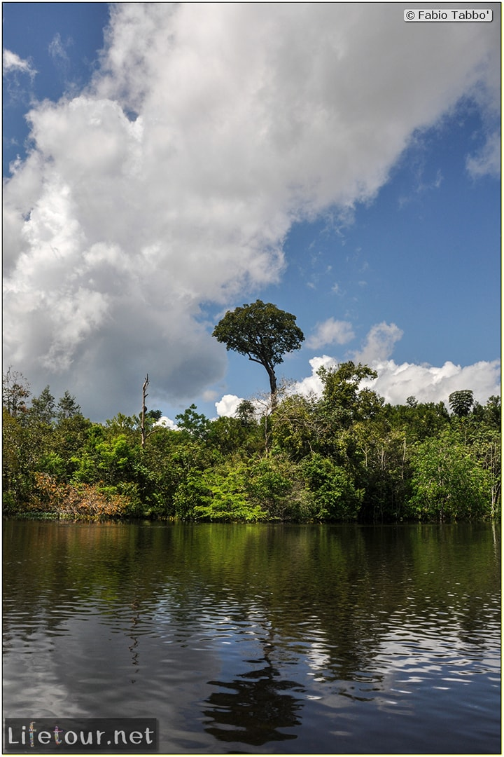 Fabio's LifeTour - Brazil (2015 April-June and October) - Manaus - Amazon Jungle - Cruising the Amazon river- other pictures - 10834