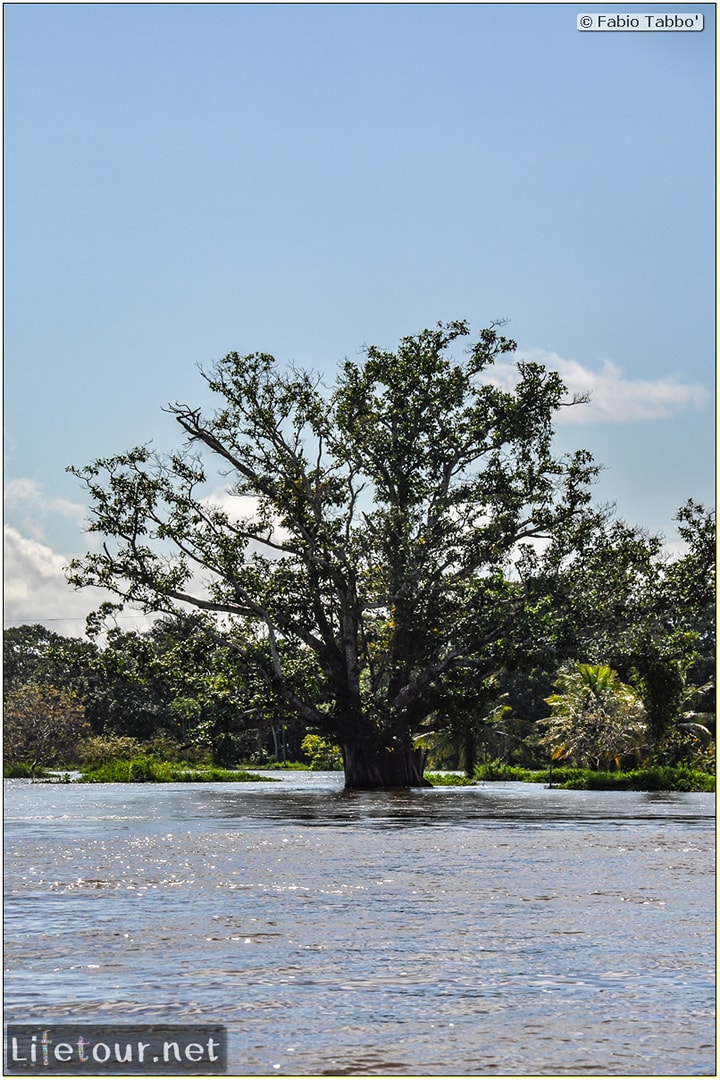 Fabio's LifeTour - Brazil (2015 April-June and October) - Manaus - Amazon Jungle - Driving a motorboat on the Amazon river - 9220