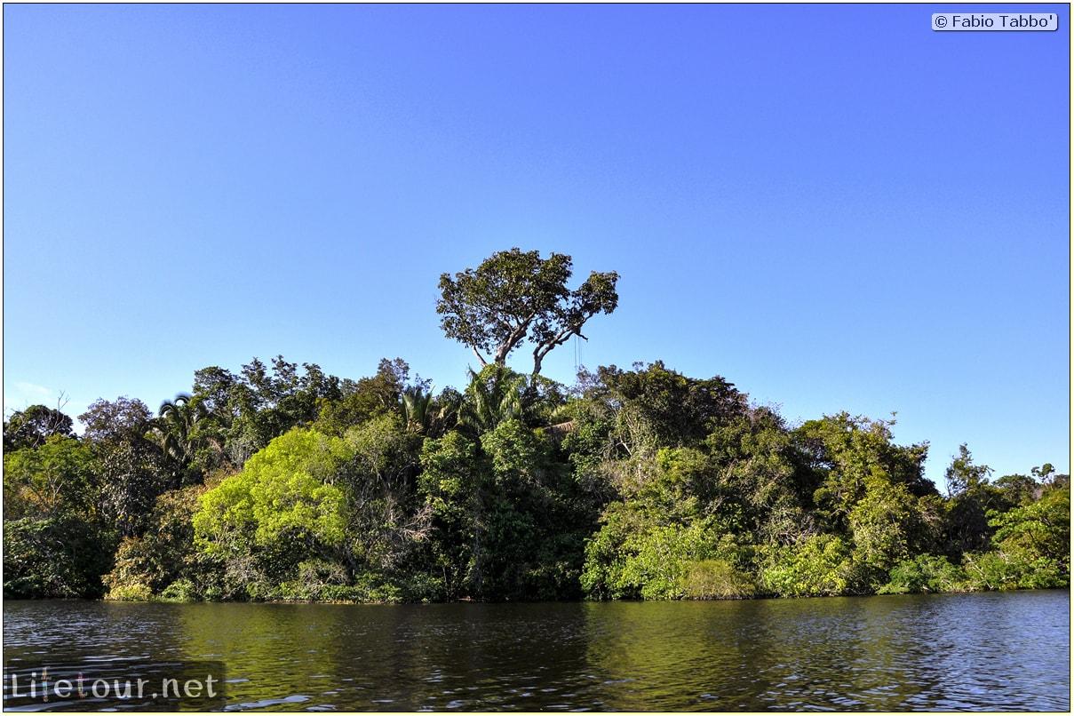 Fabio's LifeTour - Brazil (2015 April-June and October) - Manaus - Amazon Jungle - Jungle trekking - 1-boat trip - 8732